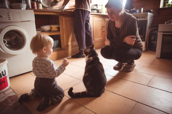 vinco-the-cat-i
